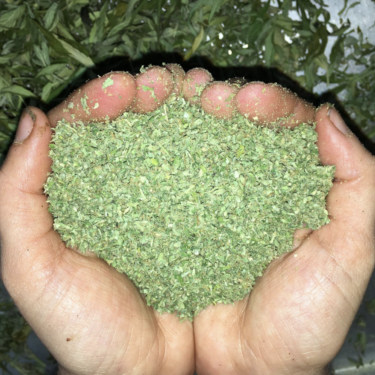 ground marijuana in cupped hands